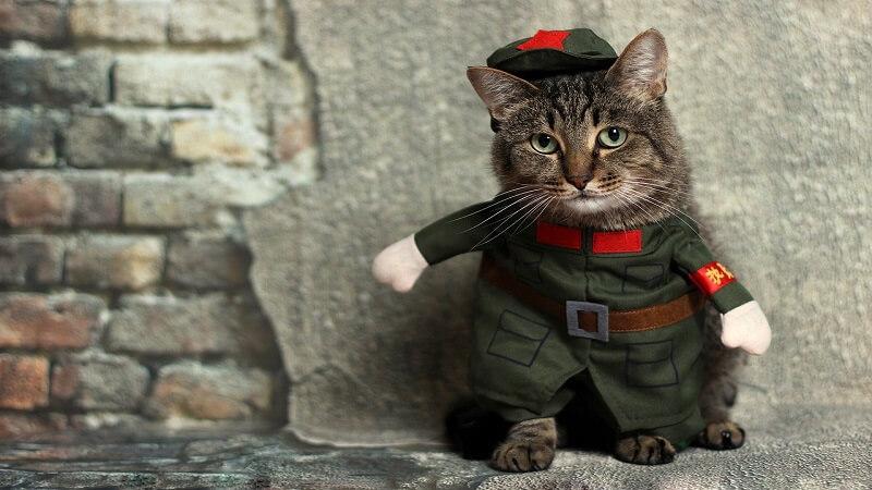 cute animal costume